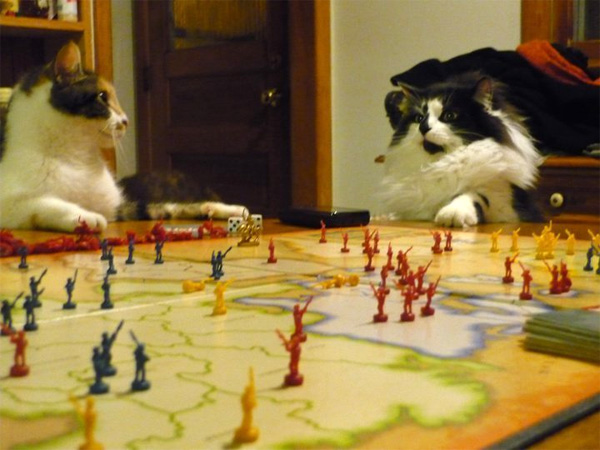 board games cat risk